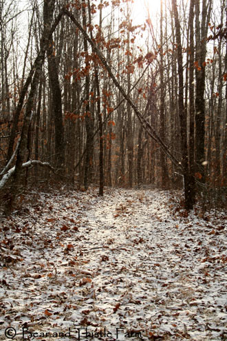 snowy-road-through-woods-copy