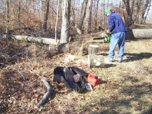 cutting-hickory-trees