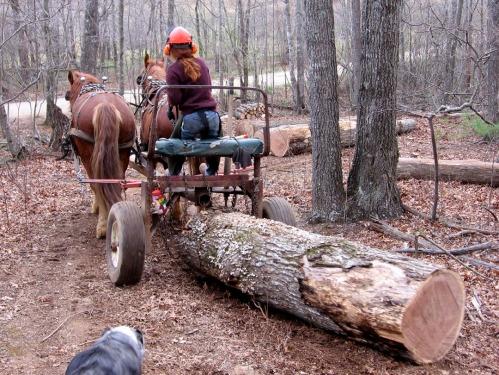 lady-horselogger