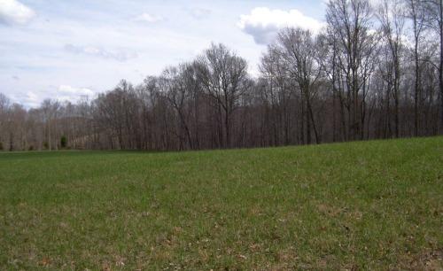 spring-pastures