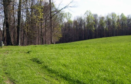 trees-greening