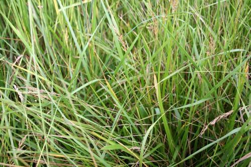 all grass