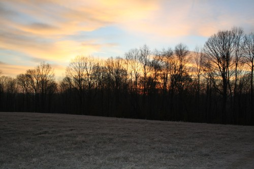 Icy pasture sunrise