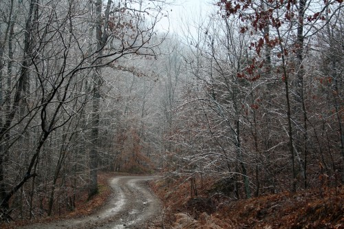 Icy woods and road