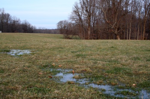 Standing water on hilltop pasture