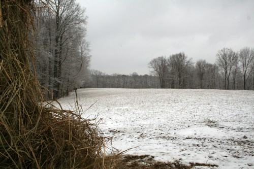 Hay pile framing snow pasture