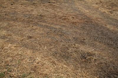 Winter feeding paddock