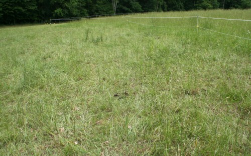 Lower pasture, just-grazed paddock