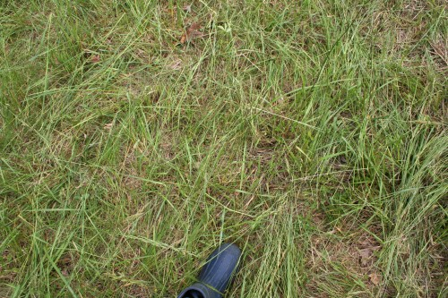 Lower pasture, residual
