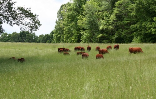 moving through Lower Pasture, May