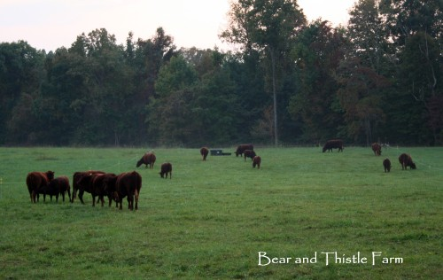 Fall grazing