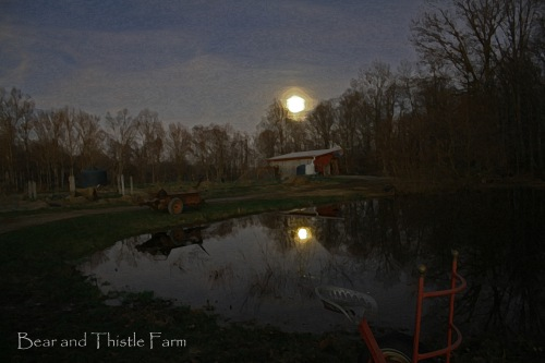 Moon over pond christmas eve