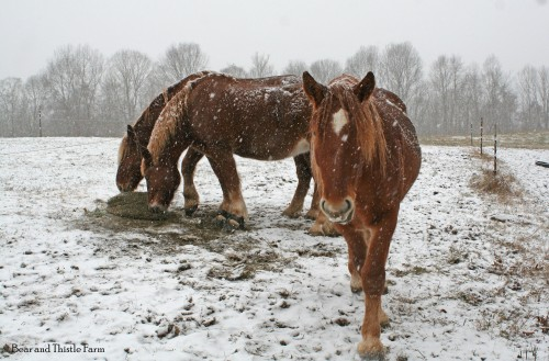 first-snow_anne-wants-more-hay